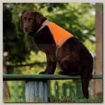 Жилет сигнальный для собак OSSO Fashion