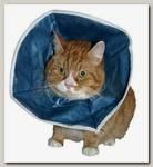 Защитный воротник для кошек и маленьких собак Kruuse мягкий