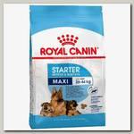 Royal Canin Maxi Starter для щенков крупных пород до 2-х месяцев и кормящих сук
